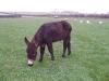 Archie Donkey 1 week